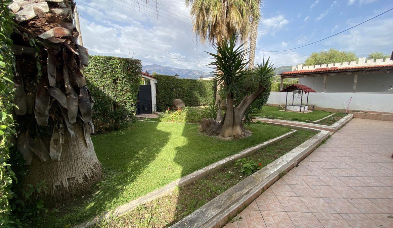 Patras Palm Tree